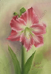 amaryllis flower painted in oils