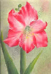 final highlights to amaryllis flower painted in oils